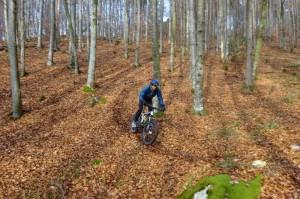 Auertaler Trail